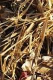 Brown Suchej trawy ziele tekstura Zdjęcie Stock