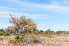 Brown suchy krajobraz Fotografia Stock