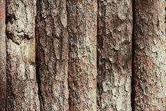 Brown tła tekstury skorupa drewniane desek bele szczeka Obrazy Royalty Free