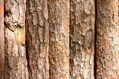 Brown tła tekstury skorupa drewniane desek bele szczeka Zdjęcie Stock
