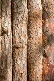 Brown tła tekstury skorupa drewniane desek bele szczeka Obraz Stock