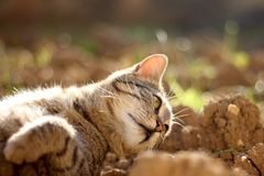 Brown Tabby Cat. Lying in the garden and sunbathing. Selective focus stock images