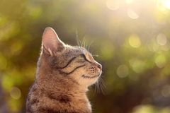 Brown Tabby Cat. Sitting in the garden, illuminated by beautiful sunlight. Selective focus stock photos