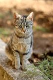 Brown Tabby Cat. Sitting in the garden. Selective focus stock photo