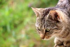 Cat In The Garden. Brown tabby cat in the garden. Selective focus, green bokeh royalty free stock photo