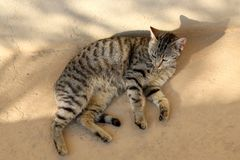 Brown Tabby Cat. Lying outdoor and sunbathing royalty free stock photos