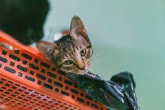 Brown Tabby Cat Lying on Plastic Rack Stock Photo
