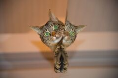 Brown Tabby Cat Peeking Beside Wall Royalty Free Stock Images