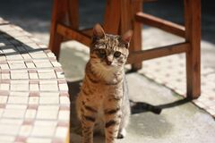 Brown Tabby Cat Sitting on Concrete Floor during Daytime Royalty Free Stock Photography
