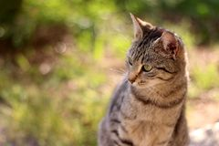 Brown Tabby Cat. Sitting in the garden, illuminated by beautiful sunlight. Selective focus royalty free stock photos