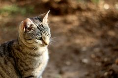 Brown Tabby Cat. Sitting in the garden. Selective focus stock images