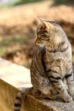 Brown Tabby Cat. Sitting in the garden. Selective focus stock photos