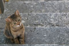 Brown Tabby Cat. Small brown tabby cat sitting on the stairs. Selective focus stock image