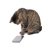 Brown tabby cat staring intently at a smart phone. Screen, on white Royalty Free Stock Images