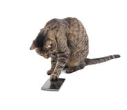 Brown tabby cat tapping on a smart phone screen. With her paw, on white Royalty Free Stock Images