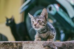 Brown Tabby Kitten With Motorcycle Background Stock Images