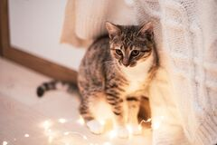 A brown tabby kitten stands by the bed. Nearby is a festive garland glowing with warm light. Scandinavian interior. Copy space