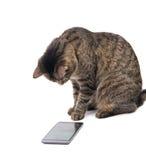Brown tabby kot gapi się uważnie przy mądrze telefonem Obrazy Royalty Free