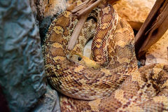 Brown and Tan Snake Coiled Stock Photo