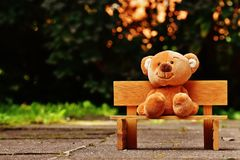 Brown Teddy Bear on Brown Wooden Bench Outside Stock Image