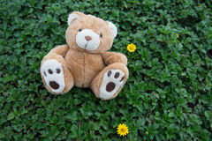 Brown teddy bear. A cute brown teddy bear Royalty Free Stock Photography