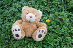 Brown teddy bear. A cute brown teddy bear Royalty Free Stock Images
