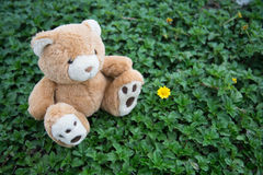 Brown teddy bear. A cute brown teddy bear Stock Image