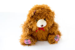 Brown teddy bear doll isolated Stock Image