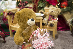 Brown Teddy Bear Eating Candy Canes imagens de stock royalty free