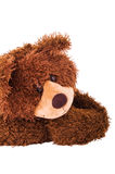 Brown teddy bear face closeup Stock Images