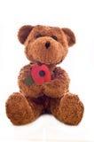 Brown teddy bear holding a poppy flower. Teddy Bear holding poppy flower royalty free stock image