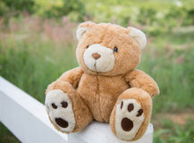 Brown teddy bear isolated. A cute brown teddy bear isolated Stock Images