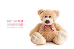Brown teddy bear isolated on white background Royalty Free Stock Images