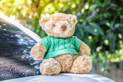 Brown Teddy bear put green shirt sitting on the back of a white stock photos
