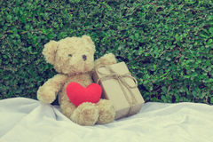 Brown teddy bear sitting on white fabric. Brown teddy bear sitting on white fabric with red heart yarn and gift box. Tree leaf bushes green fence, Texture Royalty Free Stock Photography