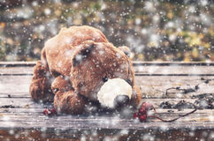 Brown teddy bear smelling ashberry and snowflakes Stock Photos
