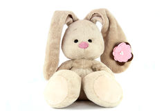 Brown teddy bunny with rose nose and flower on the ear isolated. On white background royalty free stock photos