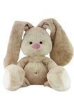 Brown teddy bunny with rose nose isolated Royalty Free Stock Photos