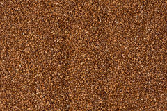 Brown Teff Grains Stock Images