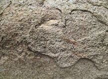 Brown texture of the flat stone. The brown texture of the flat stone, close up Royalty Free Stock Photos