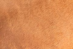Brown texture of horse hair Royalty Free Stock Image