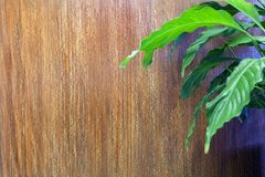 Brown texture in the relief of a vertical, shallow stripe and houseplant Calla. Decorative coating for walls Royalty Free Stock Photo