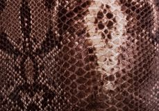 Brown texture of the skin of the adder royalty free stock photos