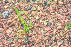 Brown texture of wet red granite Gravel. Sand and stones in water on the floor background. The ground is covered with stone fractions stock photography