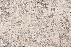 Brown texture. Brown yellow dry soil texture Royalty Free Stock Image