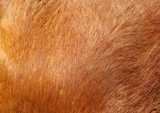 Brown textured cowhide Stock Photo