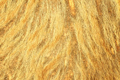 Brown textured cowhide Royalty Free Stock Photography