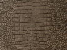 Brown textured la piel del cocodrilo imagen de archivo