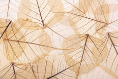 Brown textured leaves Royalty Free Stock Image