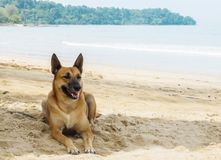 Brown Thai Dog Lying under The Shadow of Big Tree by The Sea Stock Photography